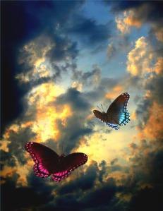 free_buterflies_sunset